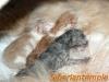 Tutti insieme cucciolata 16/05/2012